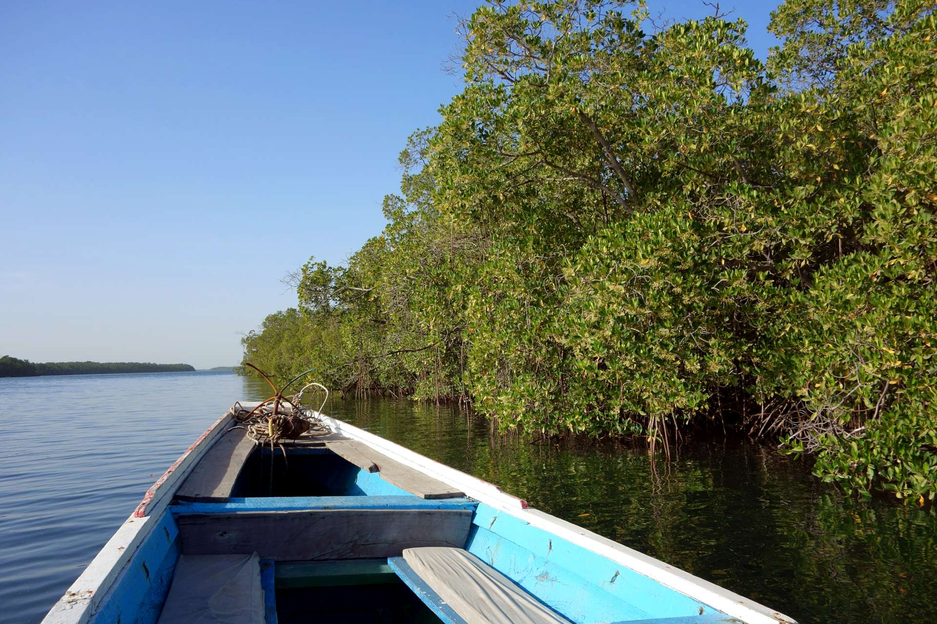 Naviguer sur le fleuve de Ndangane à Djiffer à bord d'une pirogue de haute mer, 24 mètres de long pour près de 4 mètres de large, embarcation que l'on rencontre plus souvent au large des côtes, le Xaluca.
