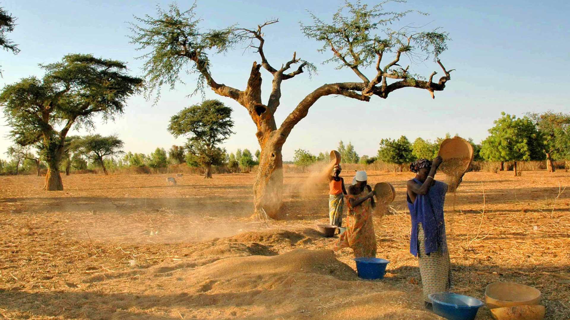 En cours de route, à l'intérieur des terres, rencontre des villageois et des troupeaux de zébus avec les bergers peuls.