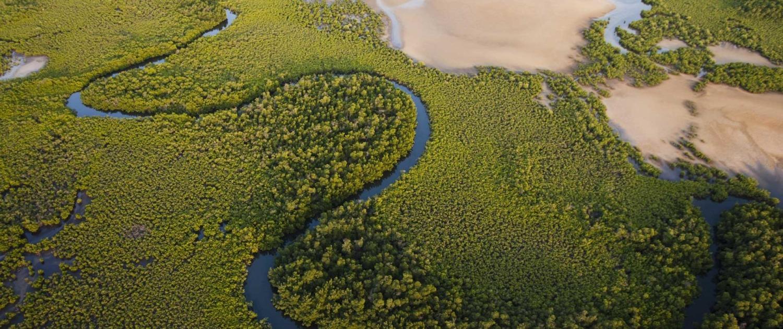 Détente au bord d'une des rives du Delta du Sine Salou ou balade en pirogue dans les bolongs pour observer les oiseaux ou initiation à la pêche traditionnelle.